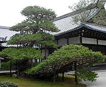 金閣寺 - 陸舟之松